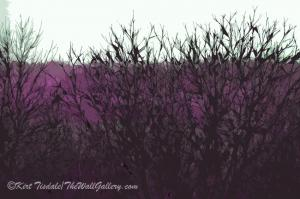 Barren Branches Go Colorful - Featured Art Prints